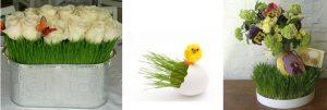 nffwheatgrass2